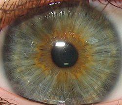 تشخیص بیماری از چشم