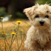 ضدعفونی حیوانات خانگی