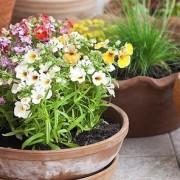 کاربرد اکسیژن فعال در گیاه