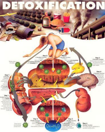 پالایش و پاکسازی بدن از سموم و آلودگی ها