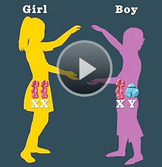 تعیین جنسیت کودک ( دختر یا پسر بودن ) از طریق خوراک