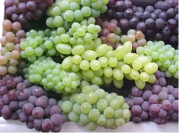 خواص گوناگون دانه انگور