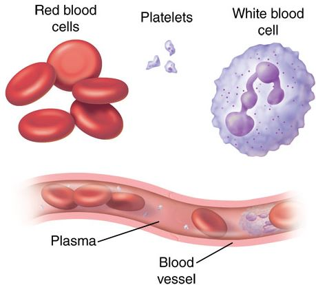 مشکلات پلاکت خون و درمان طبیعی آن